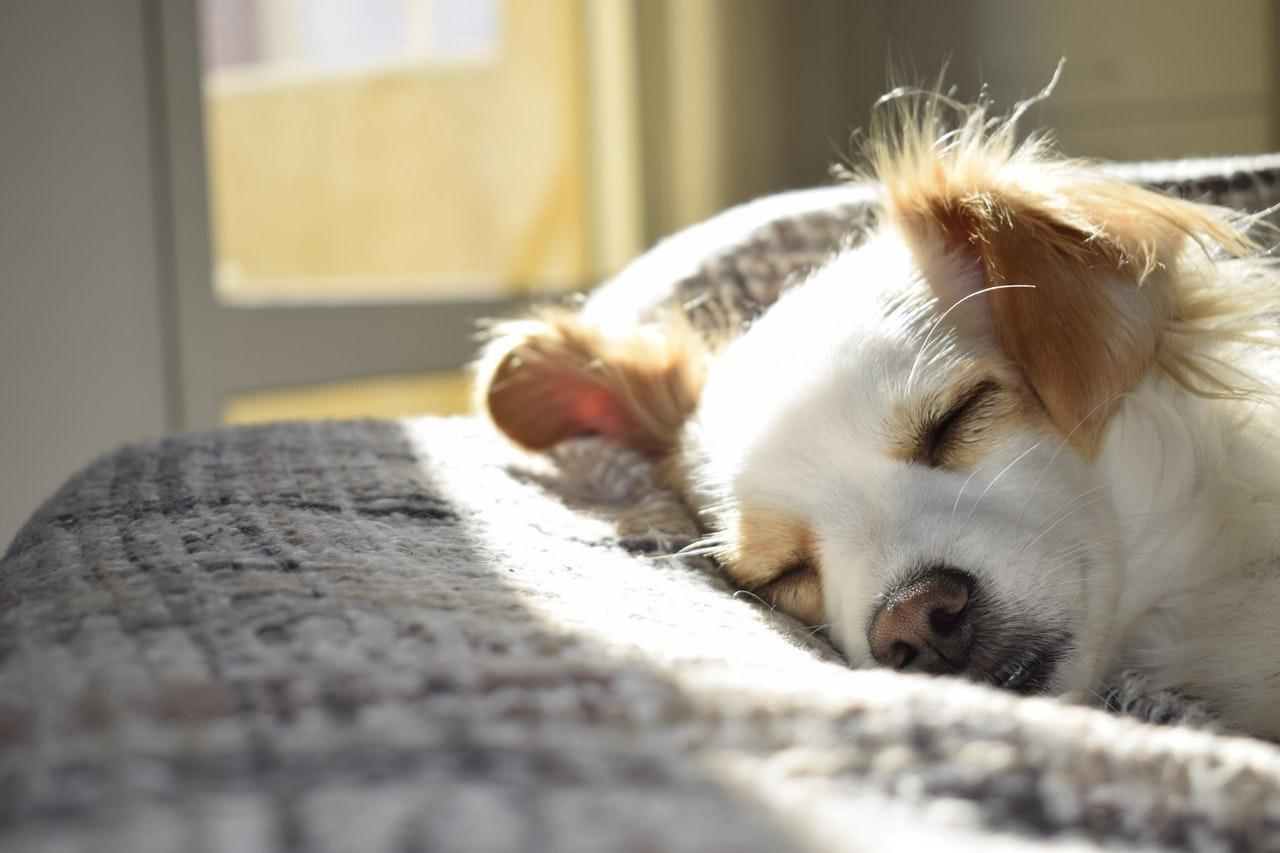 schlafender Hund